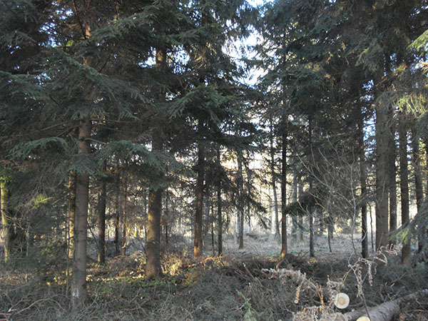 Achat de bois sur pied