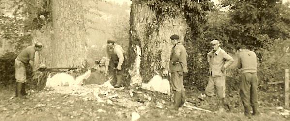 Exploitation forestière Julien Gildas